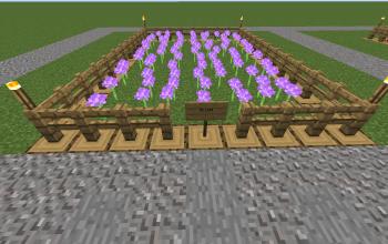 Farm Allum