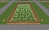 Farm Azure Bluet