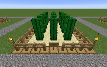 Farm Cactus