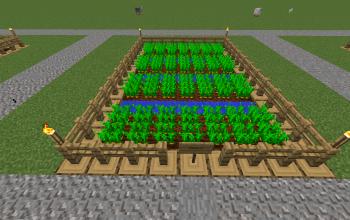 Farm Carrot
