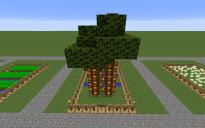 Farm Cocoa