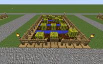 Farm Watermelon