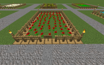 Farm Poppy