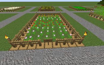 Farm Tulip