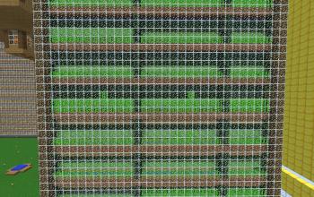suger cane farm
