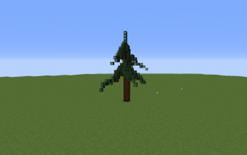 Spruce Tree 1