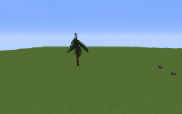 Spruce Tree 2