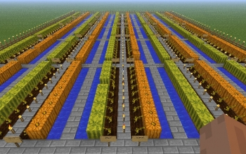 Large semiautomatic planting and harvesting of Melons and Pumpkin Farm!!