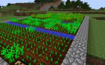 Basic Farm