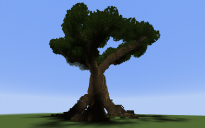 Giant Tree With a house