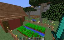 Contemporary House 03 - Bunny Farm