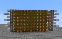 Cocoa Bean Farm