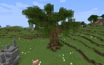 Great Oak Tree with Spanish Moss